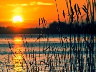 lake-reeds-sunset-landscape-nature-scenery-beach